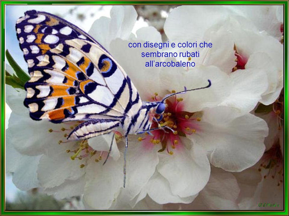 La farfalla è il simbolo della leggerezza dell'eleganza e della bellezza ma tutto ciò per un attimo vista la la brevità della sua vita