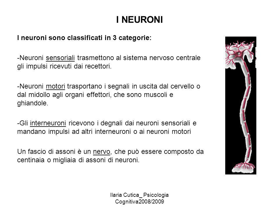 Ilaria Cutica_ Psicologia Cognitiva2008/2009 I NEURONI I neuroni sono classificati in 3 categorie: -Neuroni sensoriali trasmettono al sistema nervoso