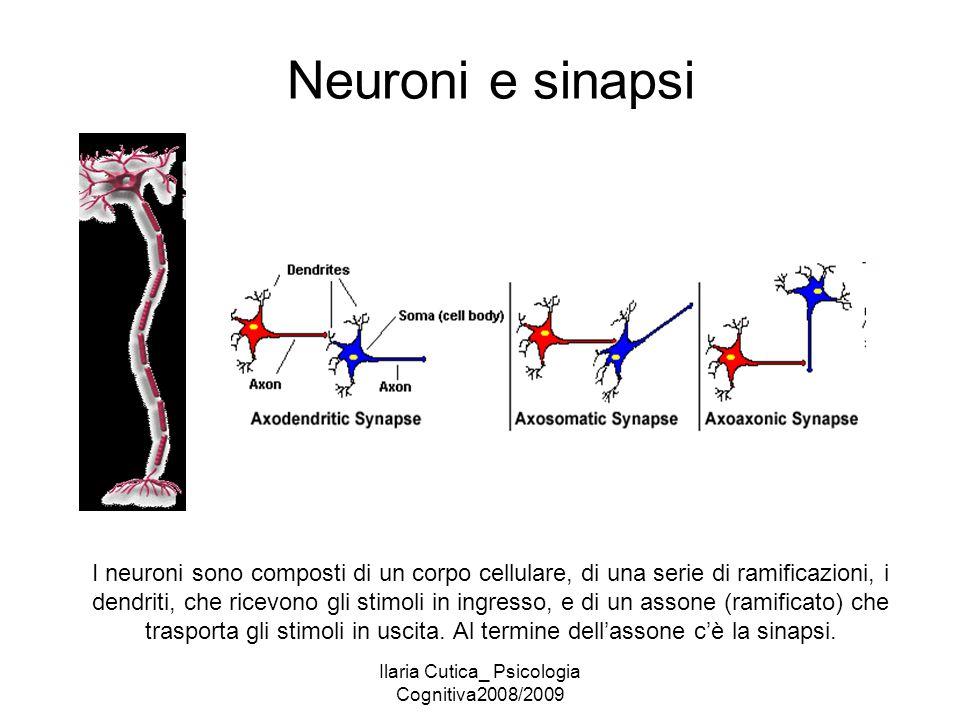 Ilaria Cutica_ Psicologia Cognitiva2008/2009 Neuroni e sinapsi I neuroni sono composti di un corpo cellulare, di una serie di ramificazioni, i dendrit