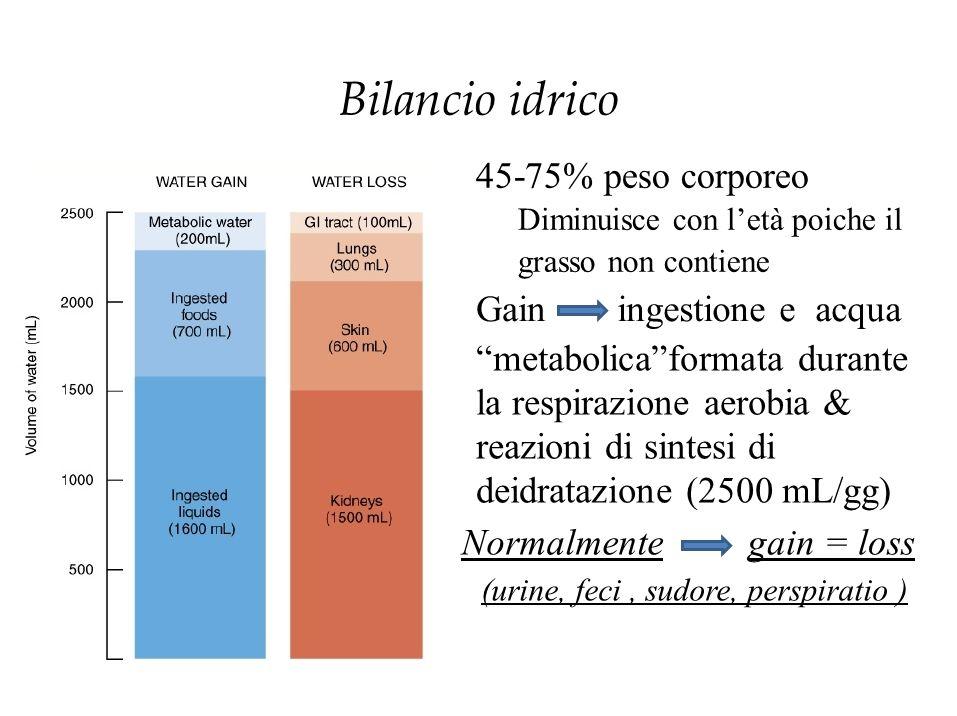 """Bilancio idrico 45-75% peso corporeo Diminuisce con l'età poiche il grasso non contiene Gainingestione e acqua """"metabolica""""formata durante la respiraz"""