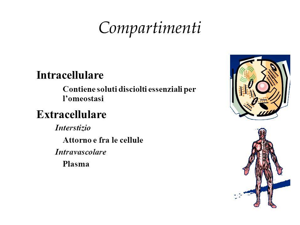 Compartimenti Intracellulare Contiene soluti disciolti essenziali per l'omeostasi Extracellulare Interstizio Attorno e fra le cellule Intravascolare P