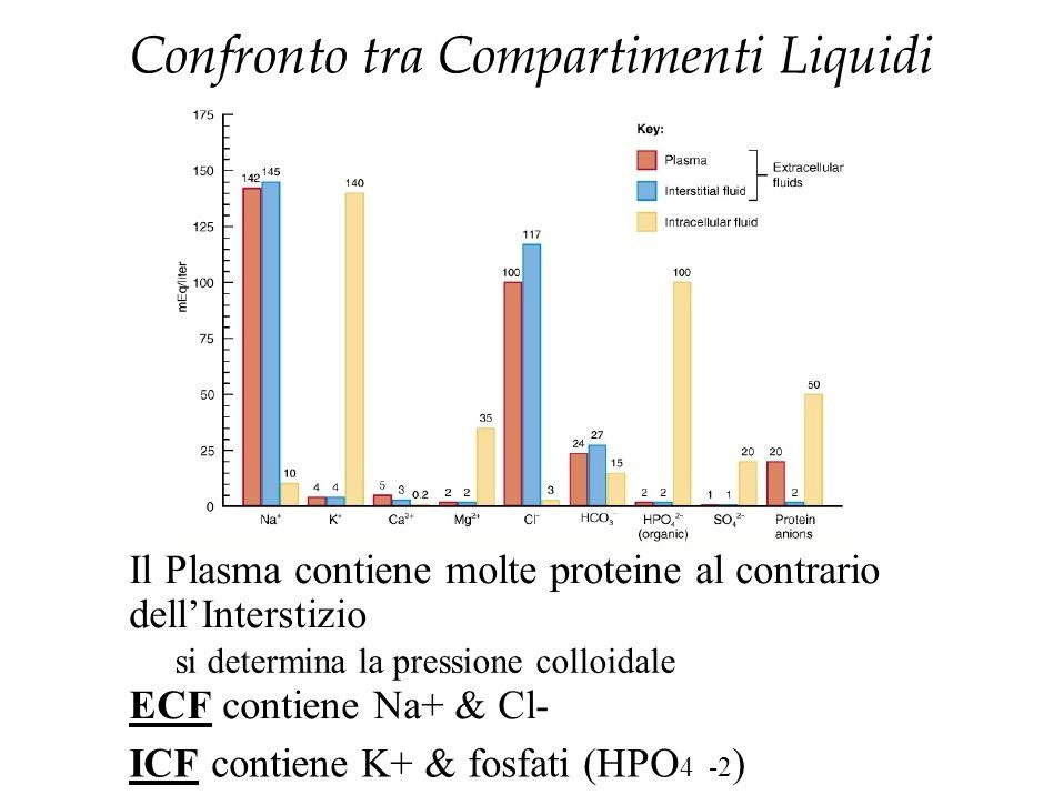 Confronto tra Compartimenti Liquidi Il Plasma contiene molte proteine al contrario dell'Interstizio si determina la pressione colloidale ECF contiene