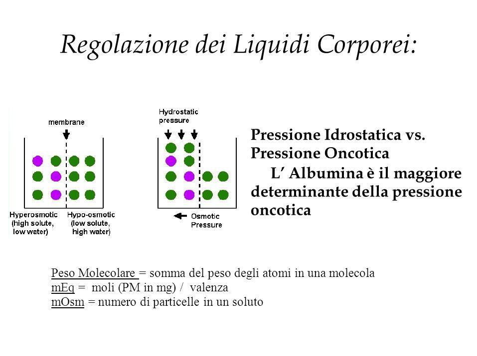 Regolazione dei Liquidi Corporei: Pressione Idrostatica vs. Pressione Oncotica L' Albumina è il maggiore determinante della pressione oncotica Peso Mo