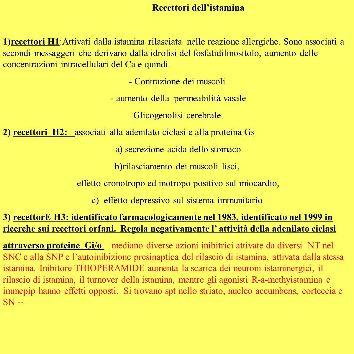 Recettori dell'istamina 1)recettori H1:Attivati dalla istamina rilasciata nelle reazione allergiche. Sono associati a secondi messaggeri che derivano