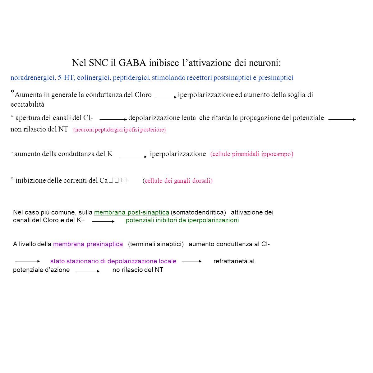 Nel SNC il GABA inibisce l'attivazione dei neuroni: noradrenergici, 5-HT, colinergici, peptidergici, stimolando recettori postsinaptici e presinaptici