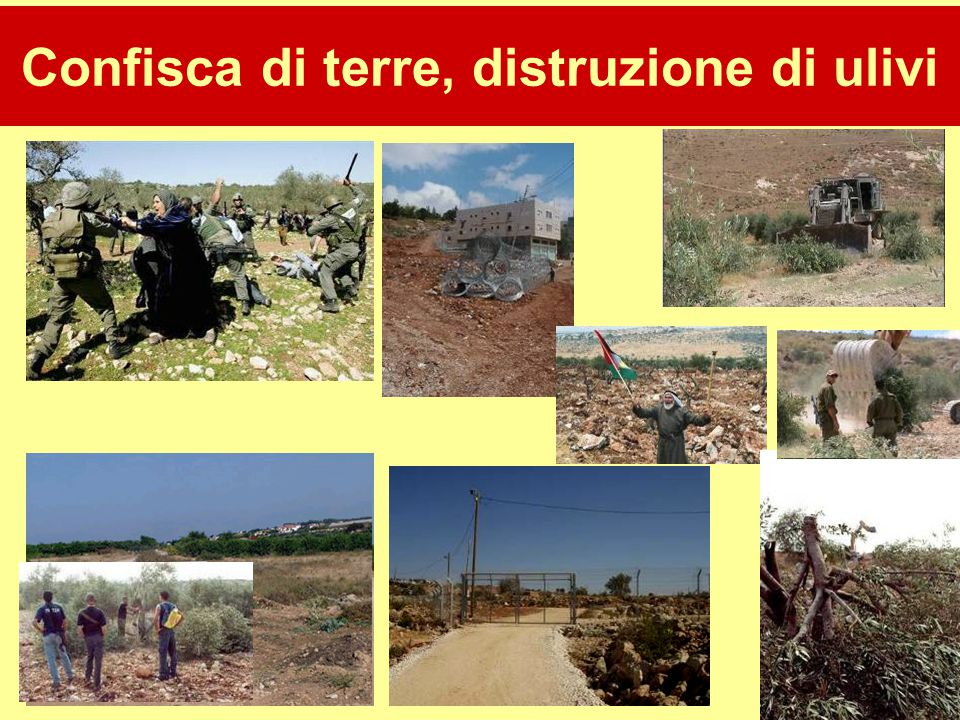 31 Confisca di terre, distruzione di ulivi