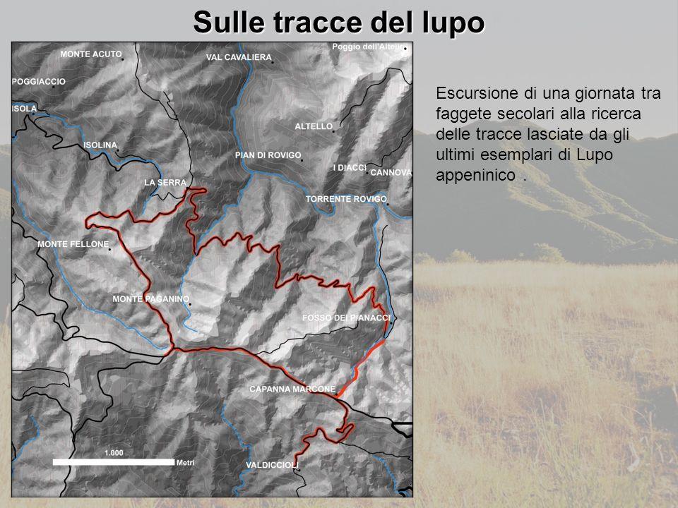 Sulle tracce del lupo Escursione di una giornata tra faggete secolari alla ricerca delle tracce lasciate da gli ultimi esemplari di Lupo appeninico.