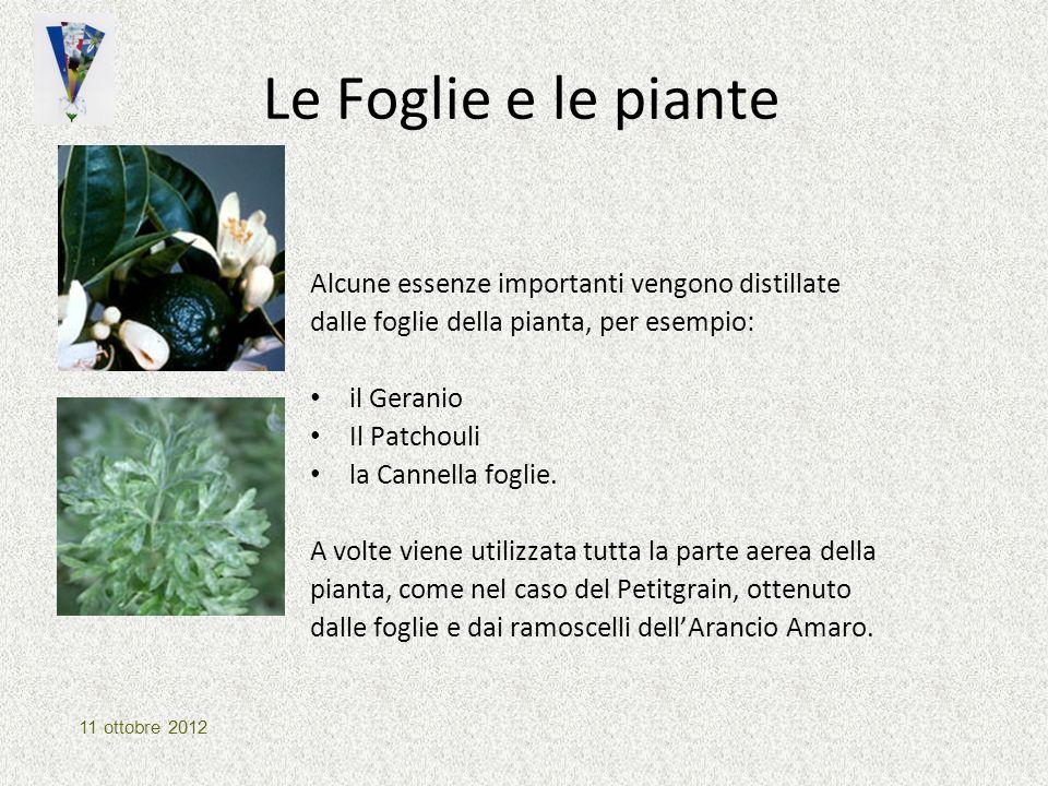 Le Foglie e le piante Alcune essenze importanti vengono distillate dalle foglie della pianta, per esempio: il Geranio Il Patchouli la Cannella foglie.