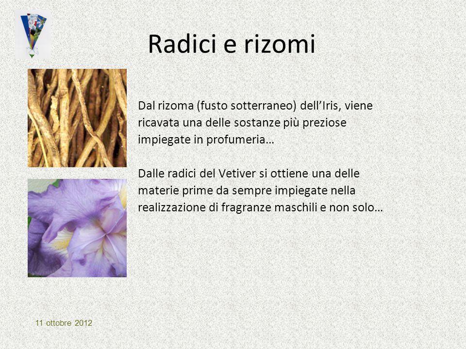 Radici e rizomi Dal rizoma (fusto sotterraneo) dell'Iris, viene ricavata una delle sostanze più preziose impiegate in profumeria… Dalle radici del Vet