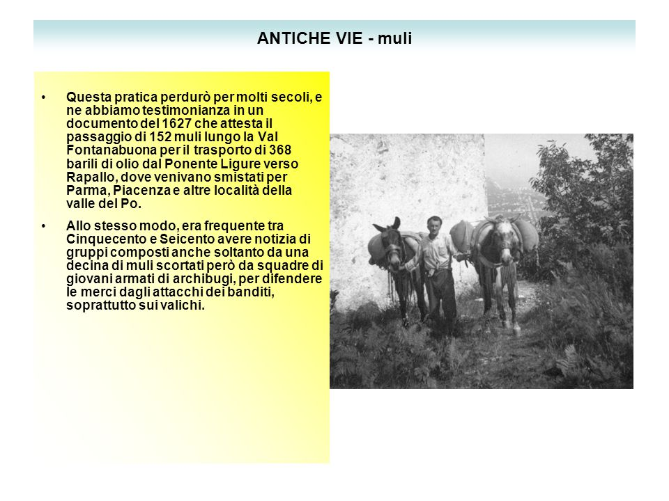 ANTICHE VIE - muli Questa pratica perdurò per molti secoli, e ne abbiamo testimonianza in un documento del 1627 che attesta il passaggio di 152 muli lungo la Val Fontanabuona per il trasporto di 368 barili di olio dal Ponente Ligure verso Rapallo, dove venivano smistati per Parma, Piacenza e altre località della valle del Po.