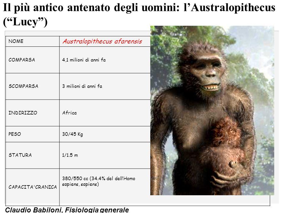 "Claudio Babiloni, Fisiologia generale Il più antico antenato degli uomini: l'Australopithecus (""Lucy"") NOME Australopithecus afarensis COMPARSA4,1 mil"