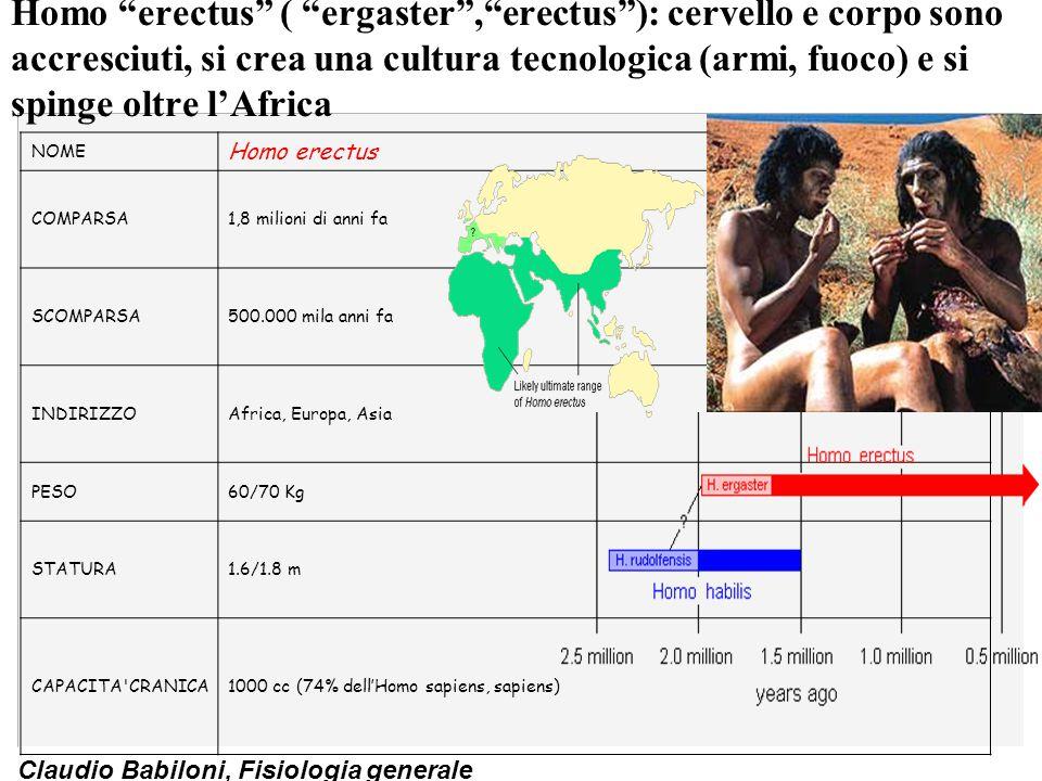 """Claudio Babiloni, Fisiologia generale Homo """"erectus"""" ( """"ergaster"""",""""erectus""""): cervello e corpo sono accresciuti, si crea una cultura tecnologica (armi"""