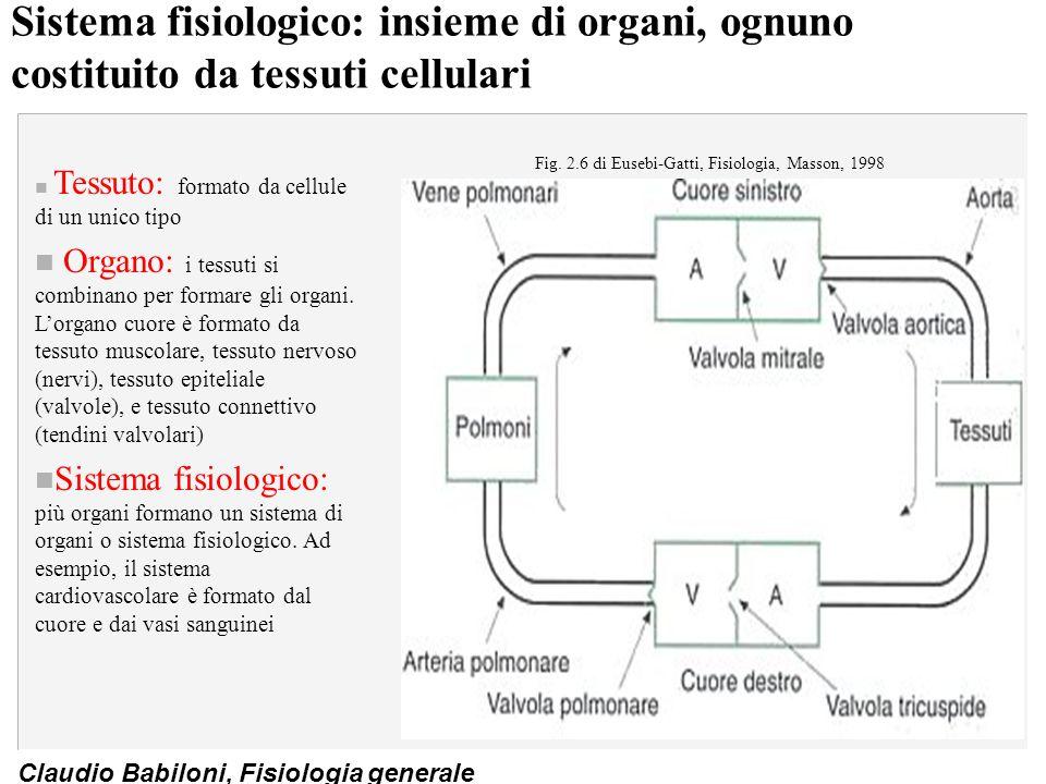 Claudio Babiloni, Fisiologia generale Sistema fisiologico: insieme di organi, ognuno costituito da tessuti cellulari n Tessuto: formato da cellule di