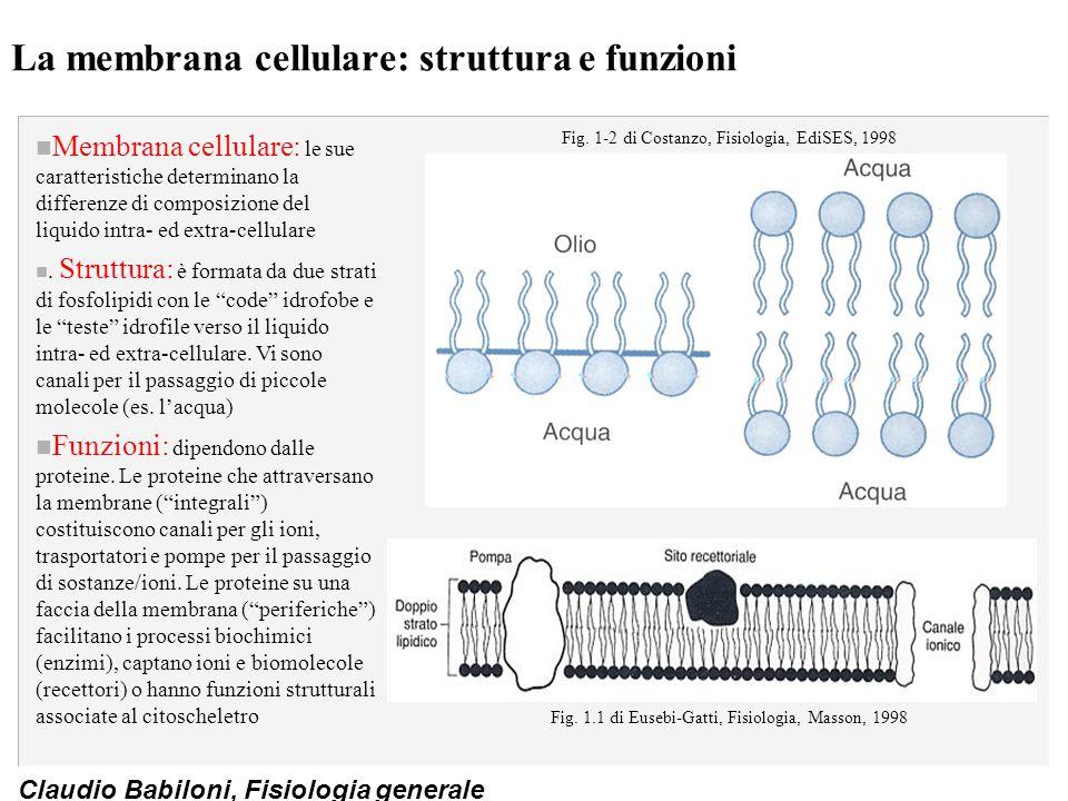 Claudio Babiloni, Fisiologia generale La membrana cellulare: struttura e funzioni n Membrana cellulare: le sue caratteristiche determinano la differen