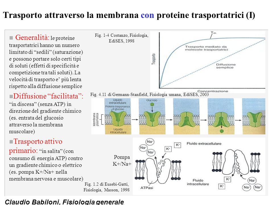 Claudio Babiloni, Fisiologia generale Trasporto attraverso la membrana con proteine trasportatrici (I) n Generalità: le proteine trasportatrici hanno
