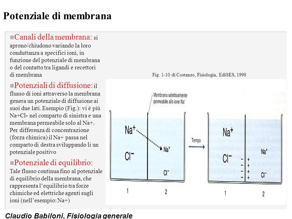 Claudio Babiloni, Fisiologia generale Potenziale di membrana n Canali della membrana: si aprono/chiudono variando la loro conduttanza a specifici ioni