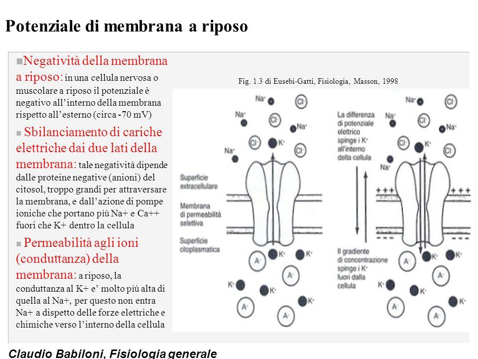 Claudio Babiloni, Fisiologia generale Potenziale di membrana a riposo n Negatività della membrana a riposo: in una cellula nervosa o muscolare a ripos