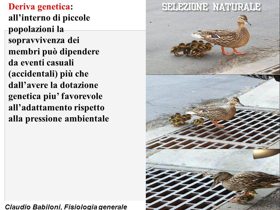 Claudio Babiloni, Fisiologia generale Accoppiamento eccitazione-contrazione n Fasi di un singolo evento: 1.