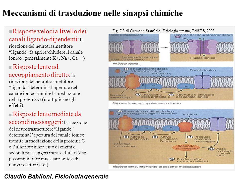 Claudio Babiloni, Fisiologia generale Meccanismi di trasduzione nelle sinapsi chimiche n Risposte veloci a livello dei canali ligando-dipendenti: la r