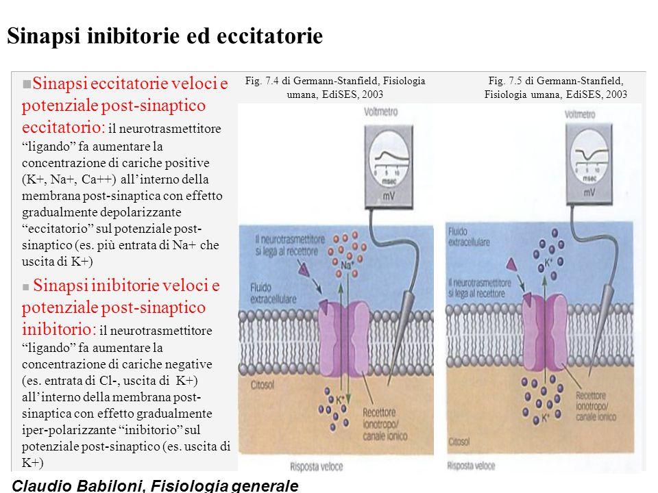 Claudio Babiloni, Fisiologia generale Sinapsi inibitorie ed eccitatorie n Sinapsi eccitatorie veloci e potenziale post-sinaptico eccitatorio: il neuro