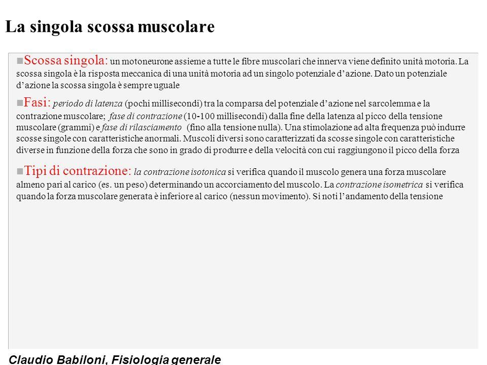 Claudio Babiloni, Fisiologia generale La singola scossa muscolare n Scossa singola: un motoneurone assieme a tutte le fibre muscolari che innerva vien