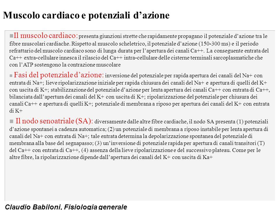 Claudio Babiloni, Fisiologia generale Muscolo cardiaco e potenziali d'azione n Il muscolo cardiaco: presenta giunzioni strette che rapidamente propaga