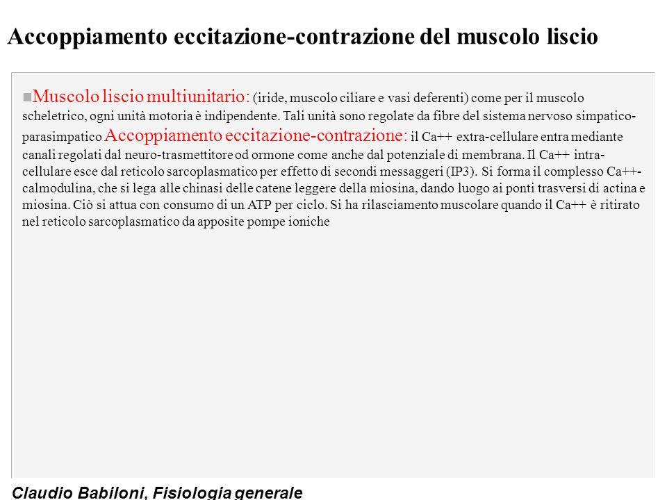Claudio Babiloni, Fisiologia generale Accoppiamento eccitazione-contrazione del muscolo liscio n Muscolo liscio multiunitario: (iride, muscolo ciliare