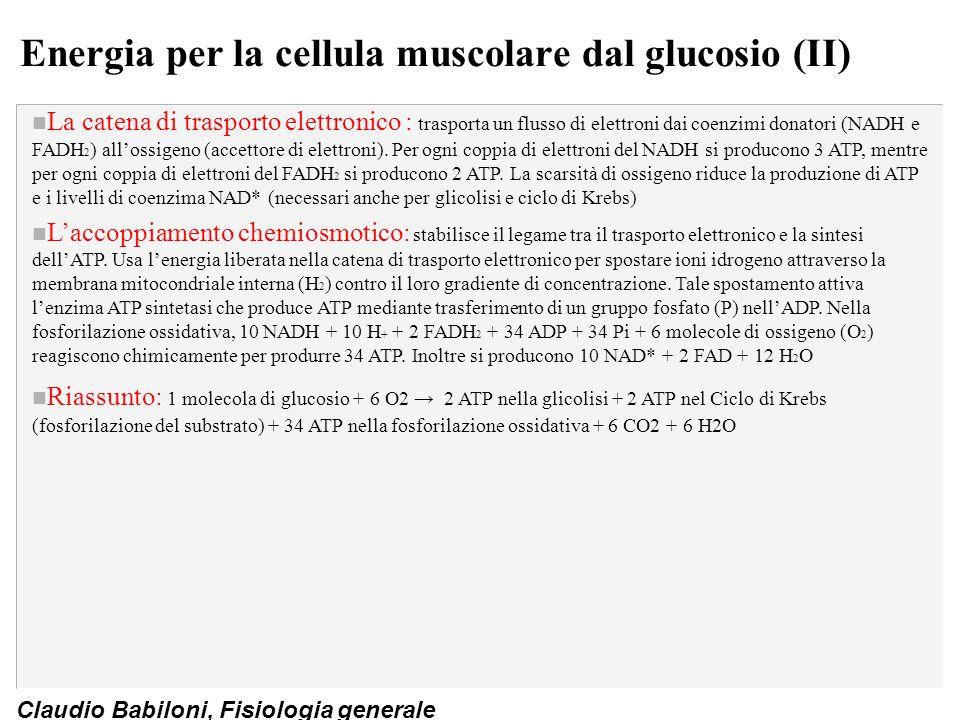 Claudio Babiloni, Fisiologia generale Energia per la cellula muscolare dal glucosio (II) n La catena di trasporto elettronico : trasporta un flusso di
