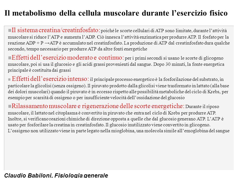 Claudio Babiloni, Fisiologia generale Il metabolismo della cellula muscolare durante l'esercizio fisico n Il sistema creatina/creatinfosfato: poiché l