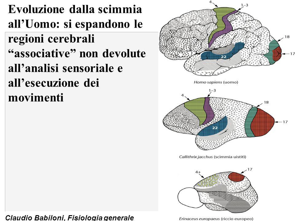 """Claudio Babiloni, Fisiologia generale Evoluzione dalla scimmia all'Uomo: si espandono le regioni cerebrali """"associative"""" non devolute all'analisi sens"""