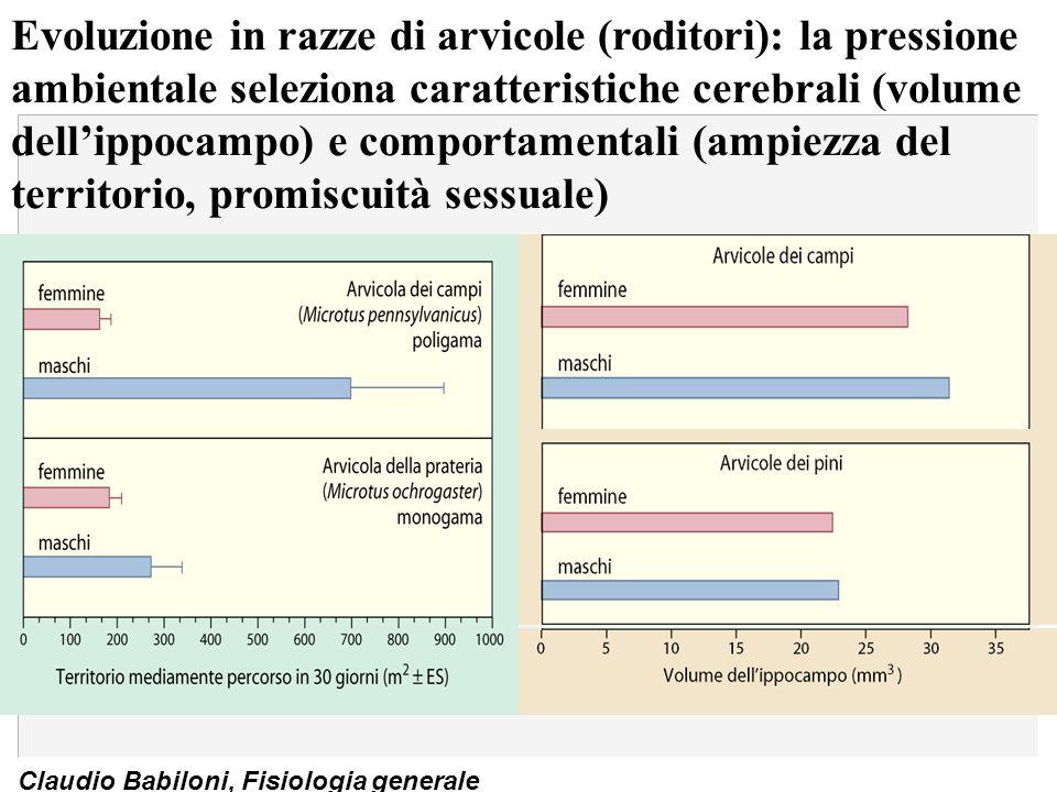 Claudio Babiloni, Fisiologia generale Evoluzione in razze di arvicole (roditori): la pressione ambientale seleziona caratteristiche cerebrali (volume