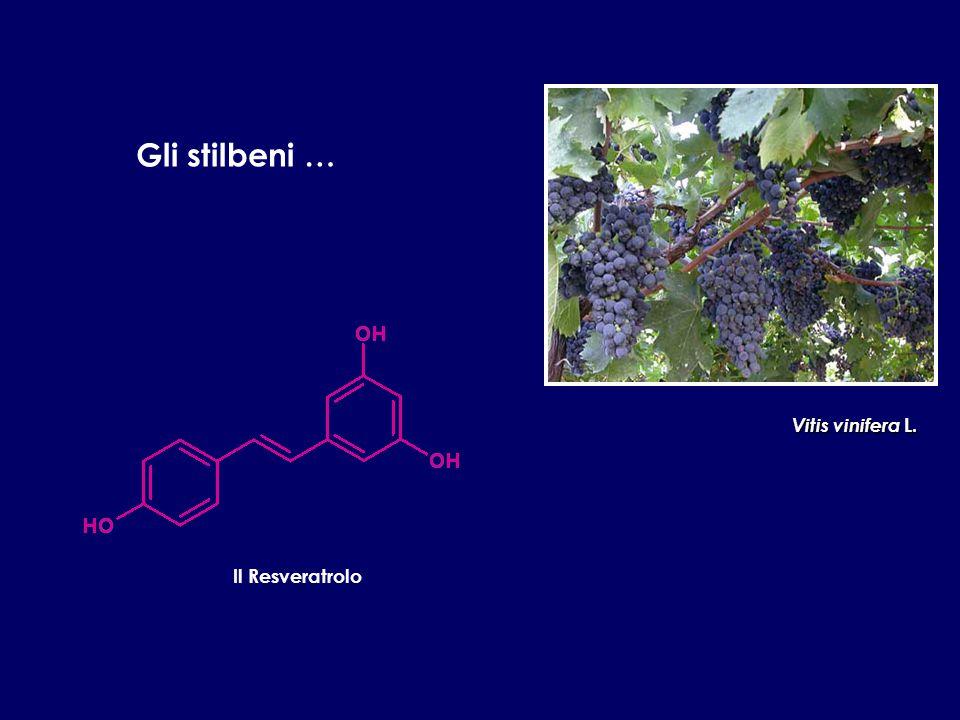 Gli stilbeni … Il Resveratrolo Vitis vinifera L.