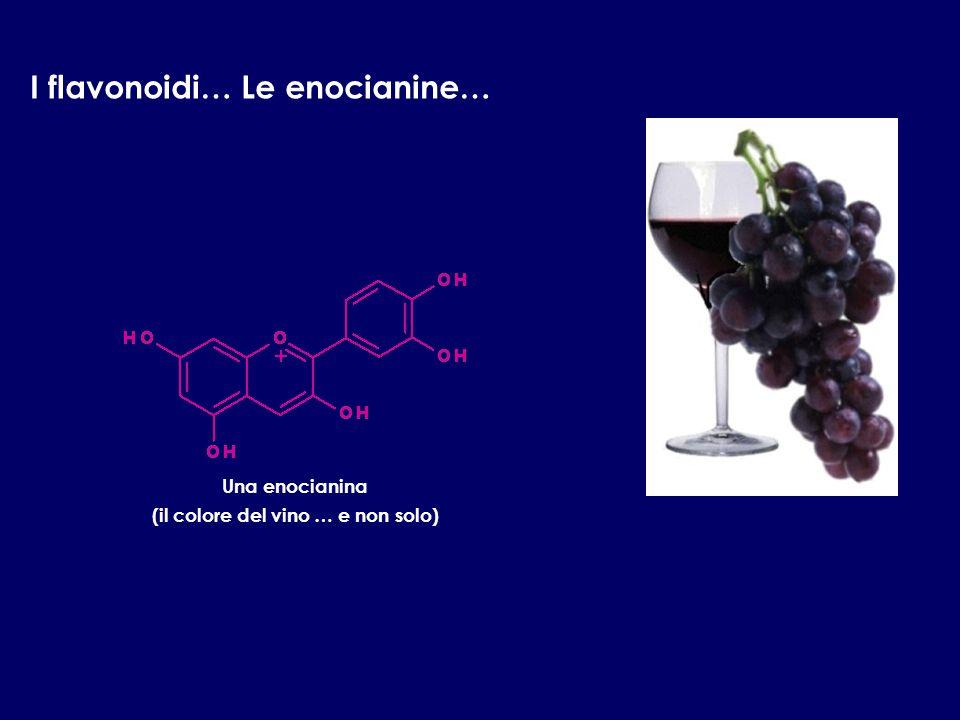 I flavonoidi… Le enocianine… Una enocianina (il colore del vino … e non solo)