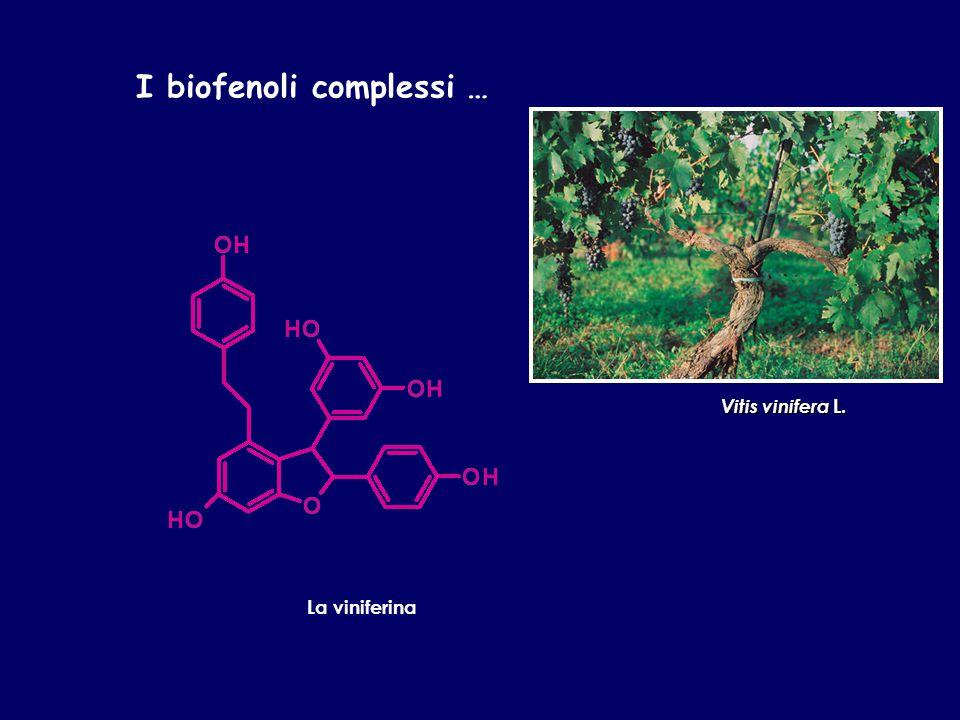 I biofenoli complessi … La viniferina Vitis vinifera L.