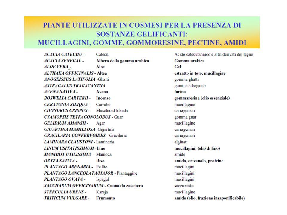 I flavonoidi … La quercetina Una catechina Vitis vinifera L.