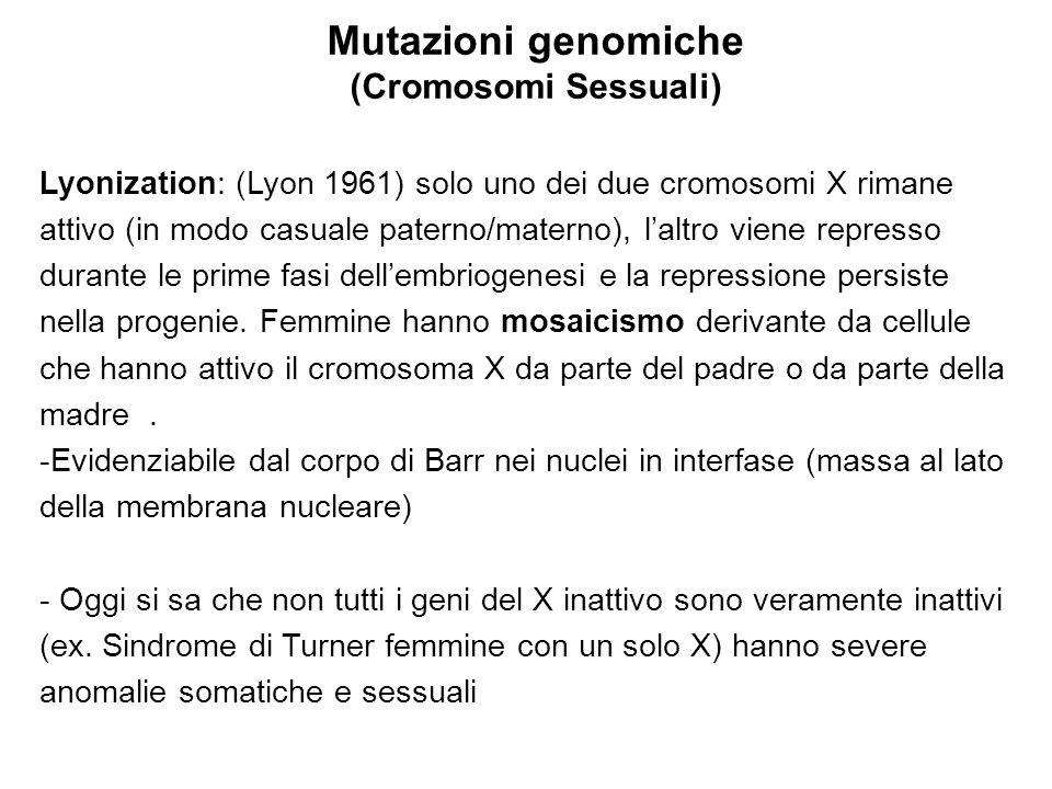 Mutazioni genomiche (Cromosomi Sessuali) Lyonization: (Lyon 1961) solo uno dei due cromosomi X rimane attivo (in modo casuale paterno/materno), l'altr