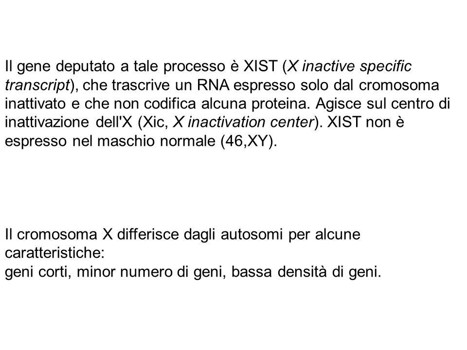 Il gene deputato a tale processo è XIST (X inactive specific transcript), che trascrive un RNA espresso solo dal cromosoma inattivato e che non codifi
