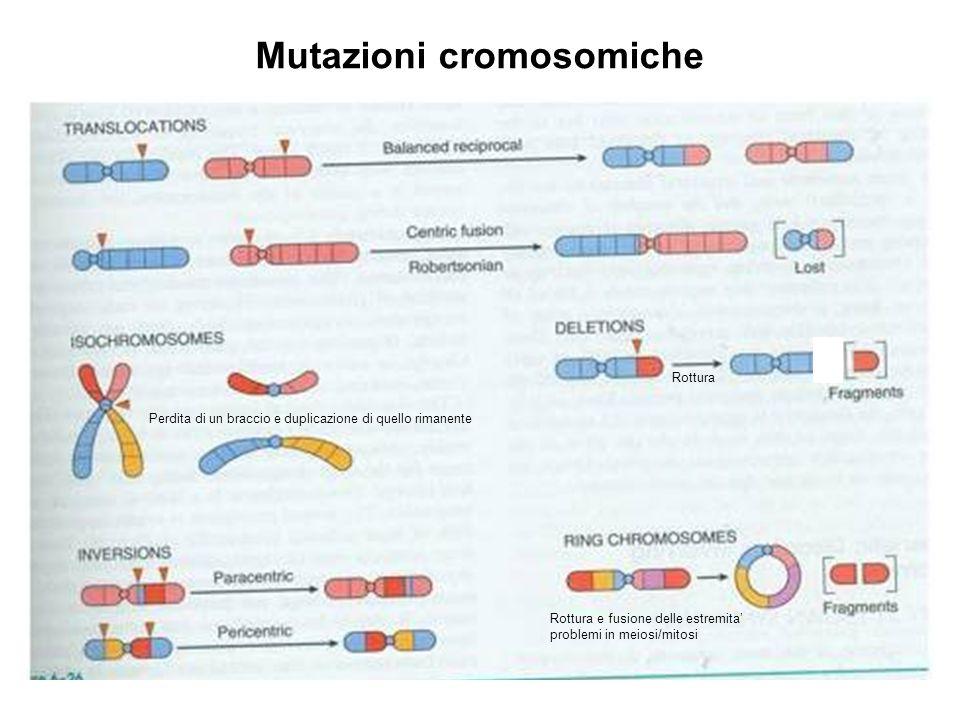 Rottura Rottura e fusione delle estremita' problemi in meiosi/mitosi Perdita di un braccio e duplicazione di quello rimanente