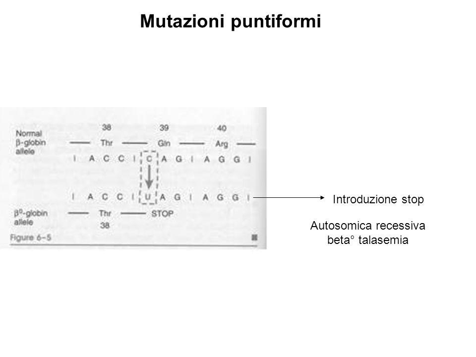 Cambio della sequenza aa a valle della mutazione Mutazioni frame-shift