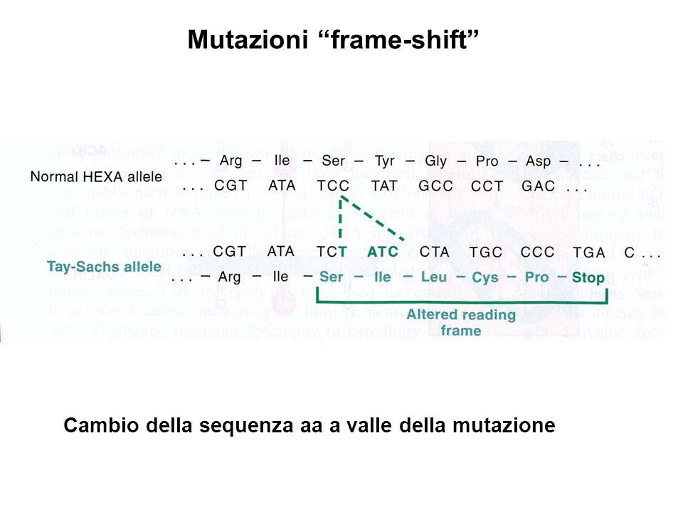 """Cambio della sequenza aa a valle della mutazione Mutazioni """"frame-shift"""""""