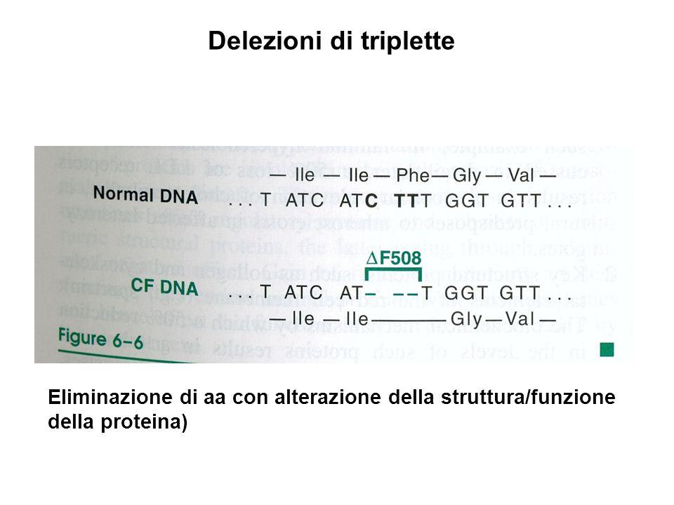 Eliminazione di aa con alterazione della struttura/funzione della proteina) Delezioni di triplette