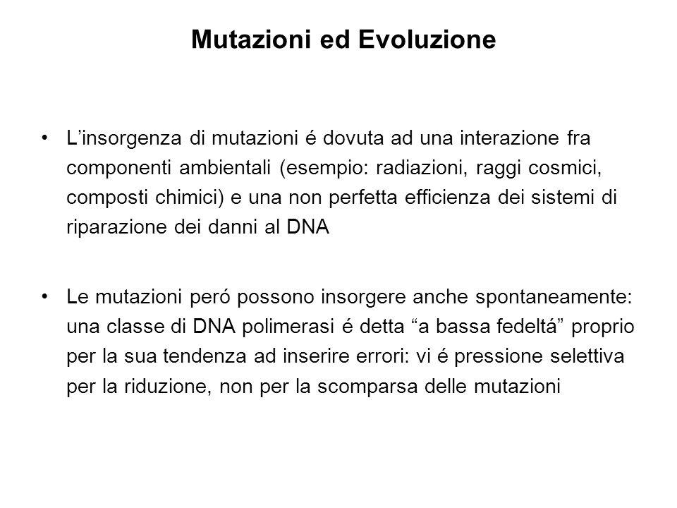 L'insorgenza di mutazioni é dovuta ad una interazione fra componenti ambientali (esempio: radiazioni, raggi cosmici, composti chimici) e una non perfe