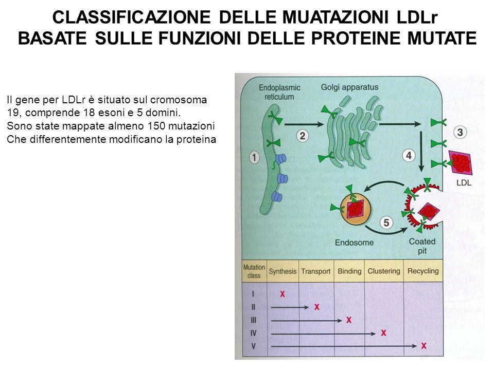 CLASSIFICAZIONE DELLE MUATAZIONI LDLr BASATE SULLE FUNZIONI DELLE PROTEINE MUTATE Il gene per LDLr è situato sul cromosoma 19, comprende 18 esoni e 5