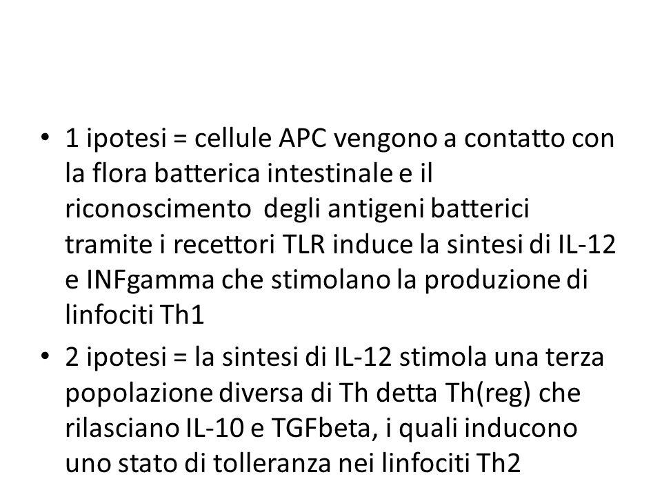 1 ipotesi = cellule APC vengono a contatto con la flora batterica intestinale e il riconoscimento degli antigeni batterici tramite i recettori TLR induce la sintesi di IL-12 e INFgamma che stimolano la produzione di linfociti Th1 2 ipotesi = la sintesi di IL-12 stimola una terza popolazione diversa di Th detta Th(reg) che rilasciano IL-10 e TGFbeta, i quali inducono uno stato di tolleranza nei linfociti Th2