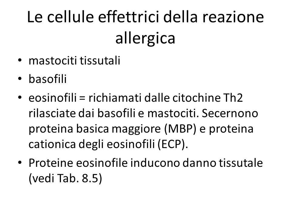 Le cellule effettrici della reazione allergica mastociti tissutali basofili eosinofili = richiamati dalle citochine Th2 rilasciate dai basofili e mastociti.