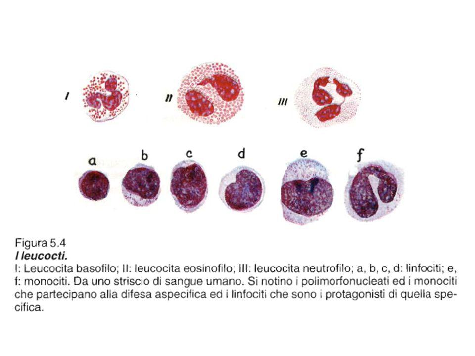 Fig. 7.7 Fig. 5.4