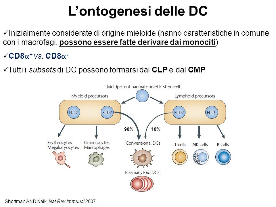 Shortman AND Naik, Nat Rev Immunol 2007 L'ontogenesi delle DC Inizialmente considerate di origine mieloide (hanno caratteristiche in comune con i macrofagi, possono essere fatte derivare dai monociti) CD8  + vs.