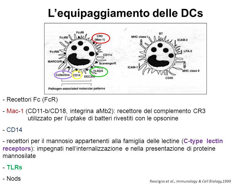 Il processo di maturazione Banchereau and Palucka, Nat. Rev. Immunol. 5, 296-306 (2005)