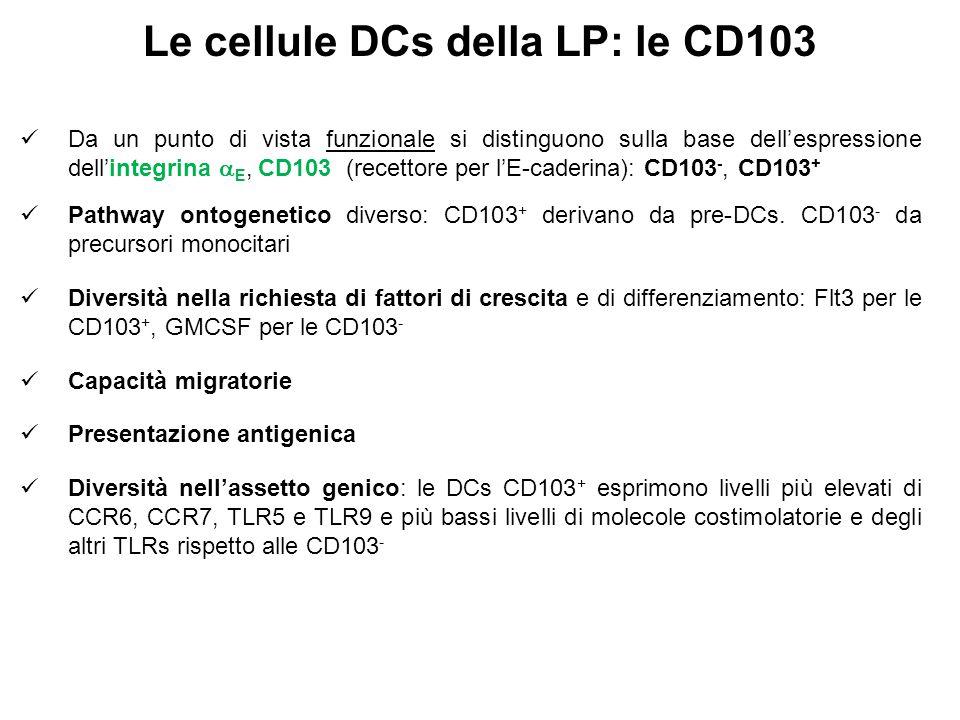 Le cellule DCs della LP: le CD103 Da un punto di vista funzionale si distinguono sulla base dell'espressione dell'integrina  E, CD103 (recettore per l'E-caderina): CD103 -, CD103 + Pathway ontogenetico diverso: CD103 + derivano da pre-DCs.
