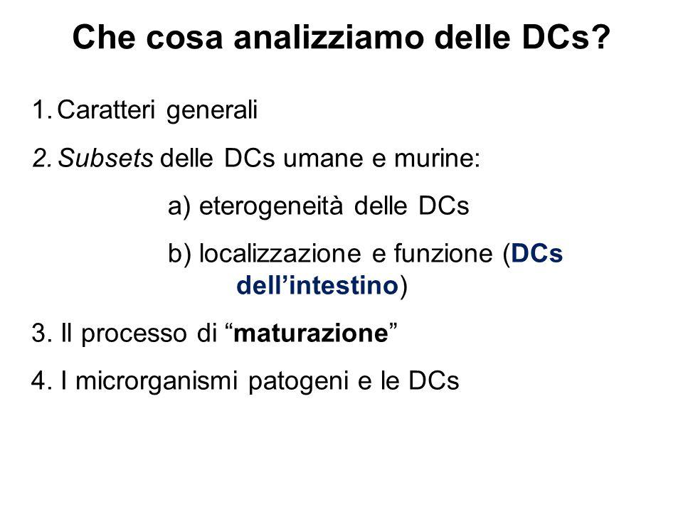 Mucosal DCs A livello del tratto gastro-intestinale le DCs si ritrovano in almeno tre compartimenti: 1.Peyer's patches (PPs) 2.Lamina propria (LP) 3.Linfonodi mesenterici (MLNs) Perchè analizziamo le cellule dendritiche intestinali.